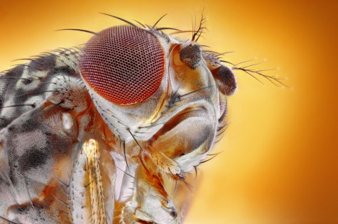 What Google Could Learn from a Fruit Fly - Cold Spring Harbor Lab on Nautilus